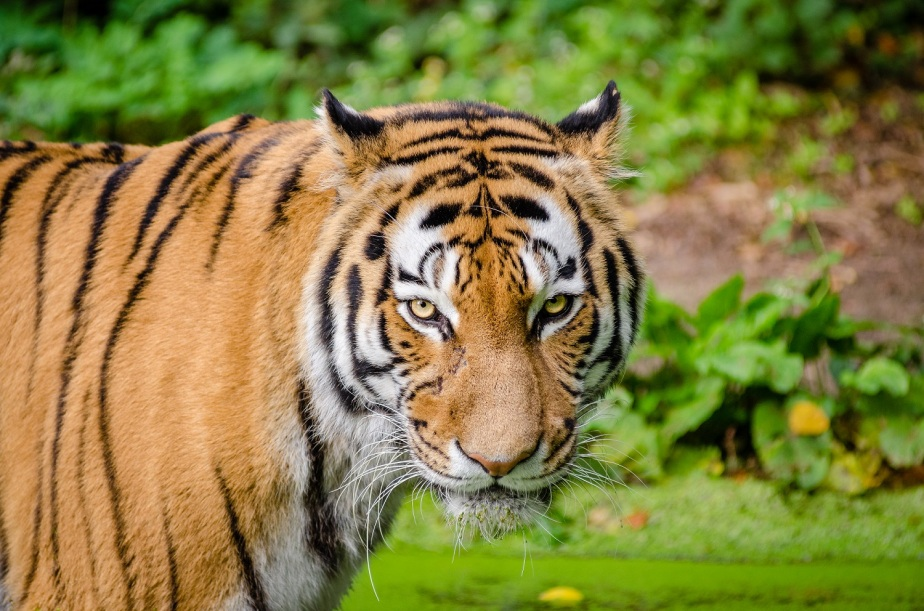 Scars & Stripes – a fable aboutfear
